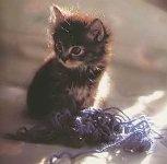 Le Chat 4 dans CHAT chaton