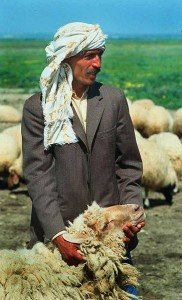 363px-Tunisian_man_with_sheep
