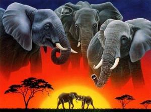 Eléphant historique dans ELEPHANT éléphan-300x222