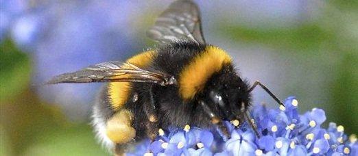 abeille-1710755-jpg_1579509