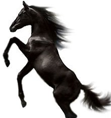 Cheval, rite et possessions dans CHEVAL 220px-Black_Stallion1