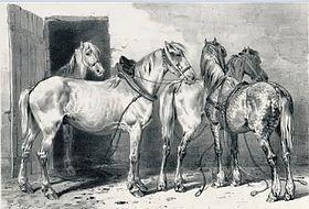 Mythes et légendes du cheval dans CHEVAL Chevaux_berrichons