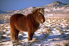 Cheval et chamanisme dans CHEVAL poney