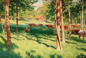 L'énergie des vaches dans VACHE - BOEUF.... troupeau-vaches-300x203