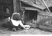 220px-bundesarchiv_bild_183-2005-0626-510_berlin_frau_beim_kaninchenfttern dans LAPIN - LIEVRE