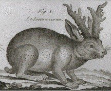 Jackalope, lapin du folklore dans LAPIN - LIEVRE lepus_cornutus