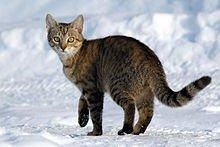 Les chats et leurs compagnons félins dans CHAT chat