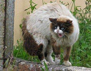Peut-on dresser un chat ? dans CHAT chat1-300x233
