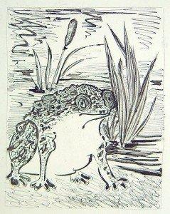Le crapaud qui se marie dans GRENOUILLE le-crapaud-picasso-239x300