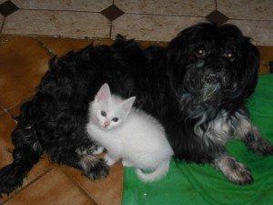 Entre chats et chiens dans CHAT thomy-domino-oc-11-640x480-300x225