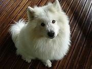 Un chien pour rendre le sourire dans CHIEN 180px-my_dog