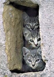 Des jouets maison pour mon chat dans CHAT chat13