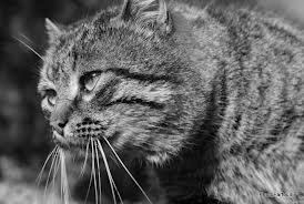 Le chat...moine dans CHAT chat14