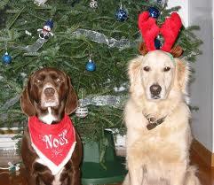 Sécurité Chien et Chat de Noël dans CHAT chien7