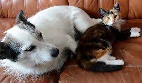 Chien ou Chat, mon animal dans CHAT chienchat
