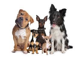Morsure de chien dans CHIEN chien2