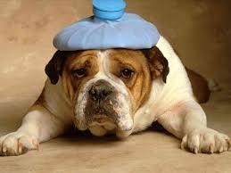 L'homéopathie ça marche sur les animaux dans CHIEN chien4
