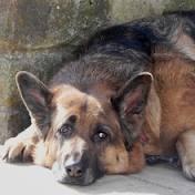 Les années affectent aussi les chiens dans CHIEN chien5