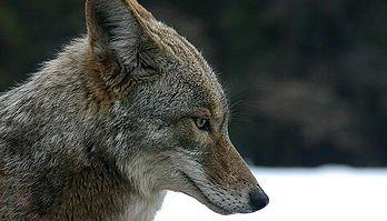 Evolution spirituelle des animaux dans XXX - ARTICLES DE PRESSE animal
