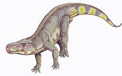 Ancêtre du Lézard dans LEZARD batrachotomus1db