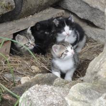 Un Chat malheureux dans CHAT chat