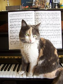 chat_au_piano dans CHAT