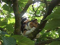 chatte-arbre5