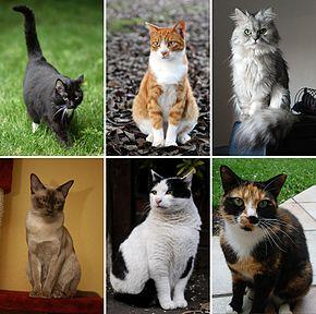 La mission des chats auprès des humains dans CHAT collage_of_six_cats-02