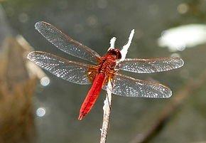 Aménagement d'une mare à libellules dans LIBELLULE libell4