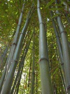 La Libellules d'Asie dans LIBELLULE bambou-225x300