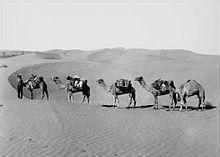 chameau1 dans CHAMEAU - DROMADAIRE