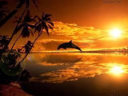 Nos frères des eaux, le Dauphin dans DAUPHIN dauphins