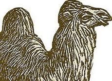 Le petit chacal et le chameau dans CHAMEAU - DROMADAIRE images