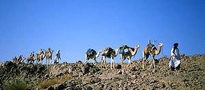 Le lait du Chameau dans CHAMEAU - DROMADAIRE lait-du-chameau