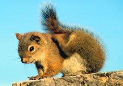Le top 10 des animaux les plus intelligents dans XXX - ARTICLES DE PRESSE ecureuil