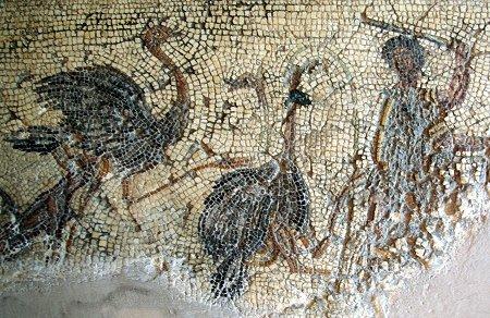 AUTRUCHE ANTIQUE  dans AUTRUCHE - EMEU antique
