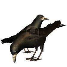 Les Deux Corbeaux dans CORBEAU corbeau2