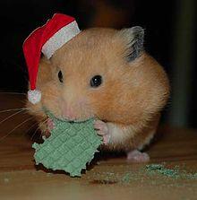 Hamster et Marques commerciales dans HAMSTER - COBAYE d_hamster