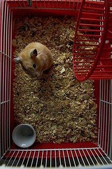 Morphologie du Hamster dans HAMSTER - COBAYE hamster_cage