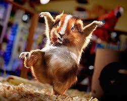 Bande dessinée du Hamster dans HAMSTER - COBAYE images-2