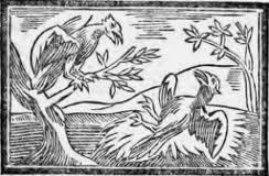 De la Corneille et des Oiseaux.  dans CORBEAU telechargement