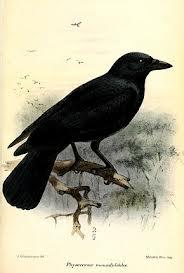 Le Corbeau et le signe Balance dans CORBEAU images-13