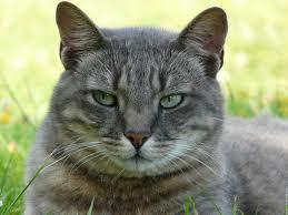 La PERSONNALITÉ du chat dans CHAT images-29