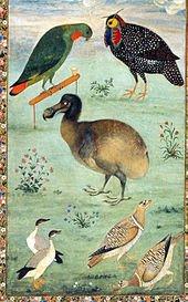 Le Dodo apparenté au Pigeon dans PIGEON - COLOMBE 170px-dodomansur