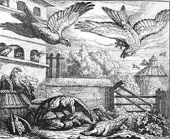 Des Colombes et du Faucon leur Roi. dans PIGEON - COLOMBE telechargement-2