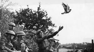 Pigeons de la Première Guerre mondiale dans PIGEON - COLOMBE telechargement-4