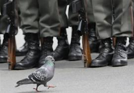 Pigeons de la guerre de 1870 dans PIGEON - COLOMBE telechargement1