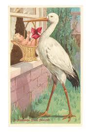 La Cigogne, un oiseau vénéré partout dans le monde dans CIGOGNE images-101
