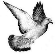 Les «nourrisseurs» de volatiles dans PIGEON - COLOMBE images-12