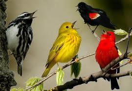 les bienfaits du chant des oiseaux  dans OISEAUX telechargement-111